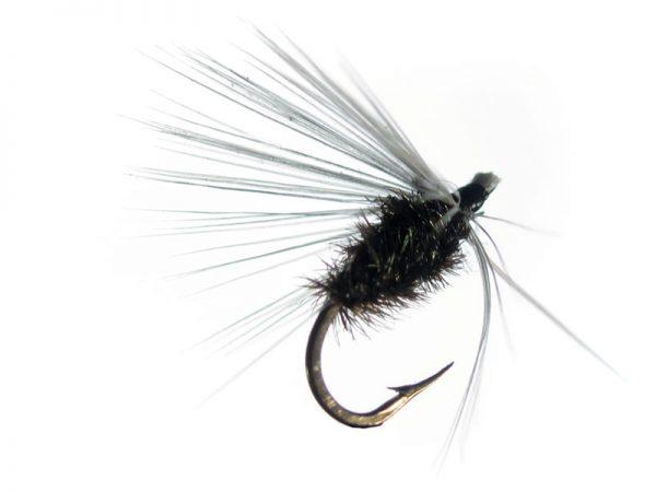 Mosca de León ahogada hormiga reina cm