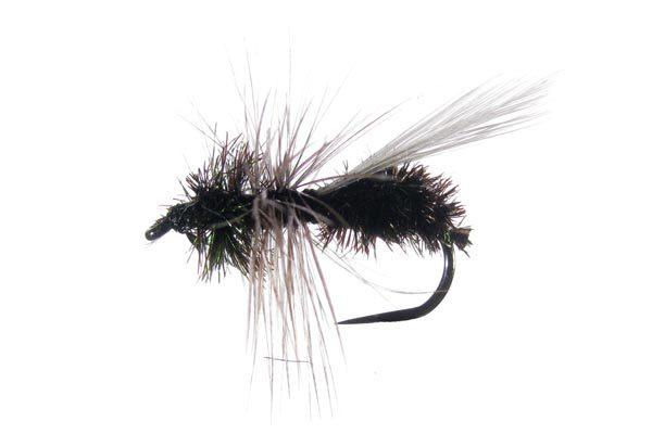 Seca Hormiga 78 sin muerte #3