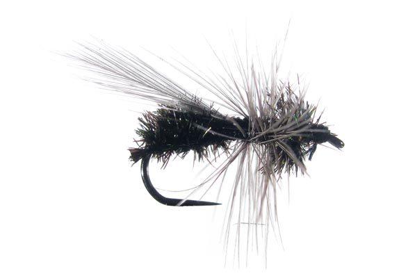 Seca Hormiga 78 sin muerte #4