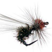 Seca Hormiga 79 sin muerte #1