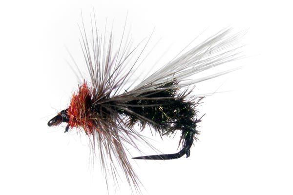 Seca Hormiga 79 sin muerte #4