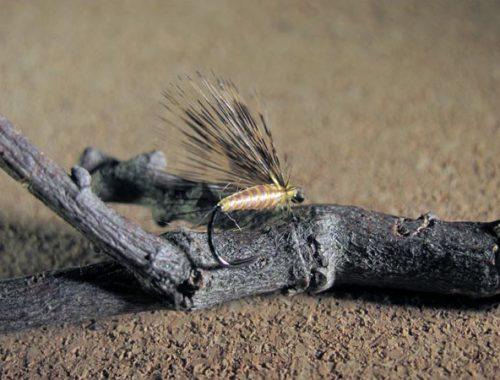 Mosca de León ahogada amarillo estría plateada, gallo pardo flor de escoba sin muerte #5