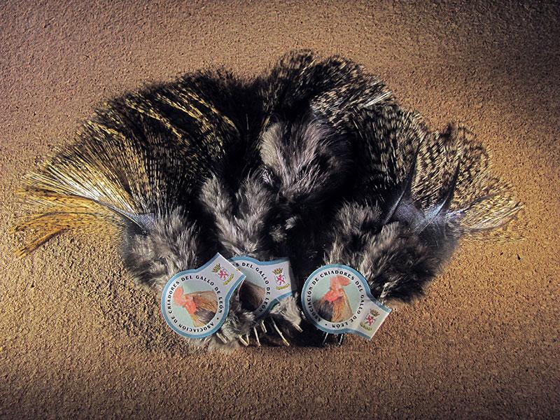 Pluma de gallo de León Pardo