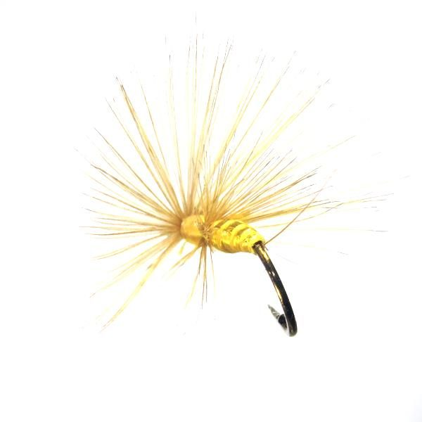 Saltona amarilla mosca ahogada de León gallo indio
