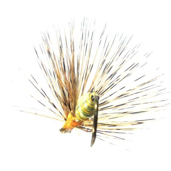 Saltona común o de San Juan mosca ahogada de León