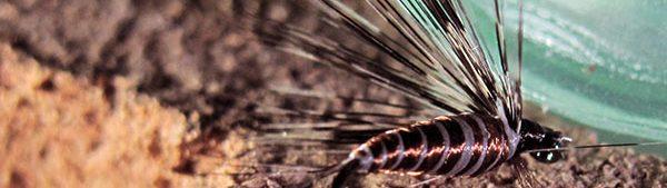 Mosca ahogada tabaco marrón pardo con pluma de León