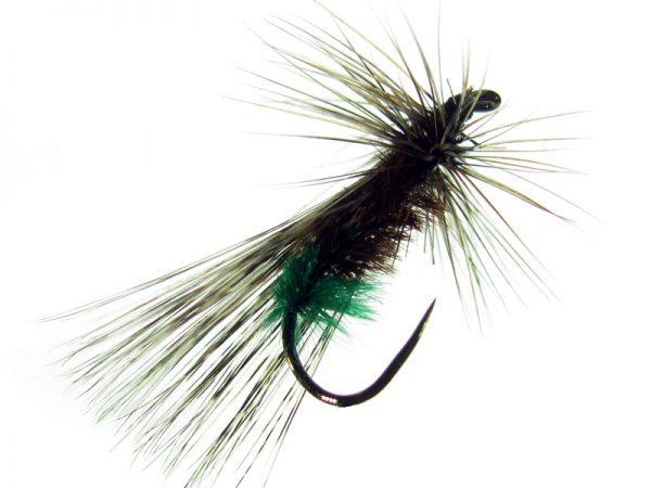 Tricóptero sarnosa hembra pardo corzuno