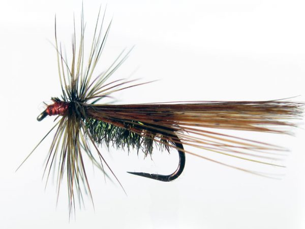 tricóptero pavo real y tejadillo en pluma de gallo de León indio rubión